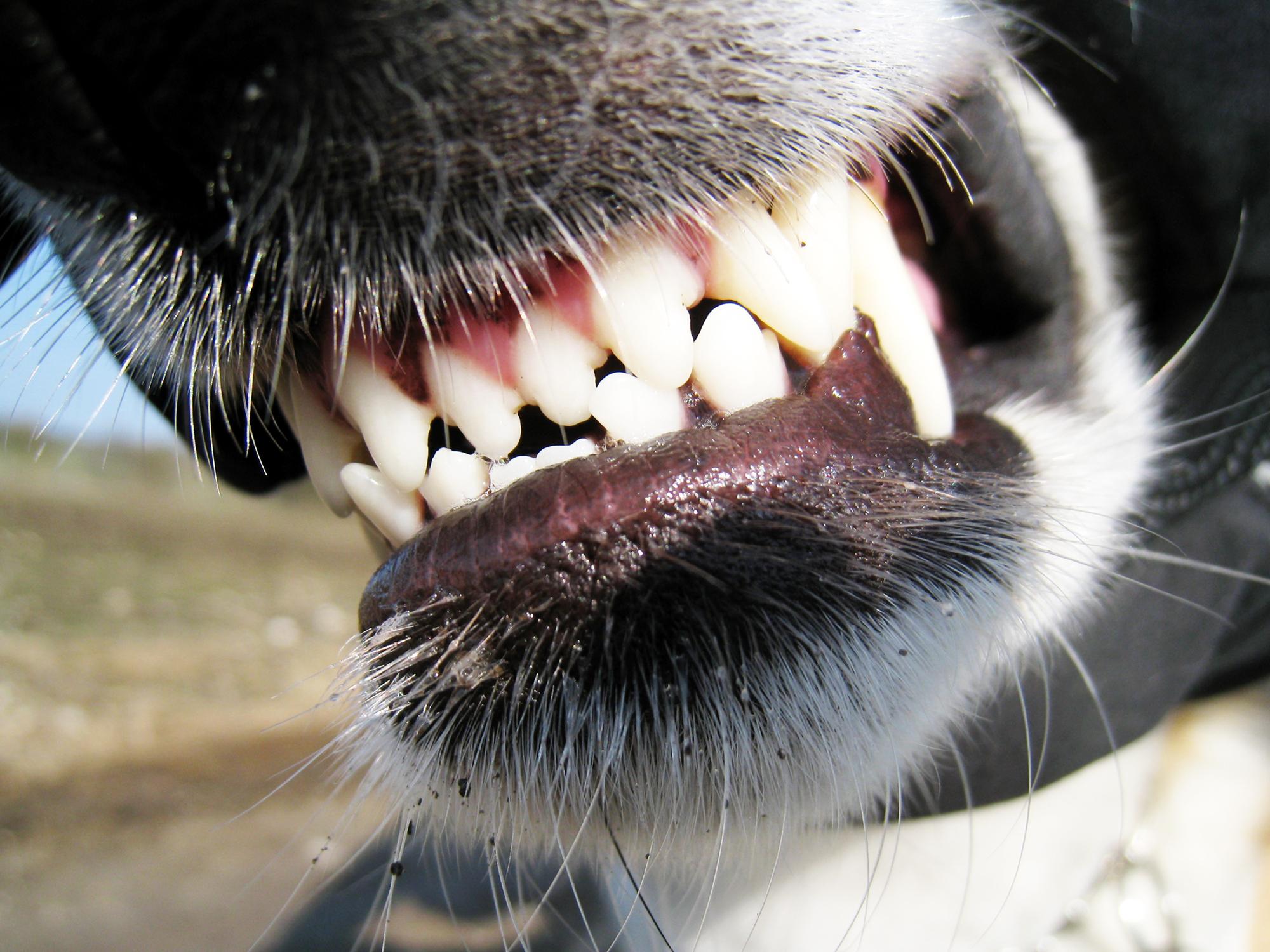 dog bite insurance