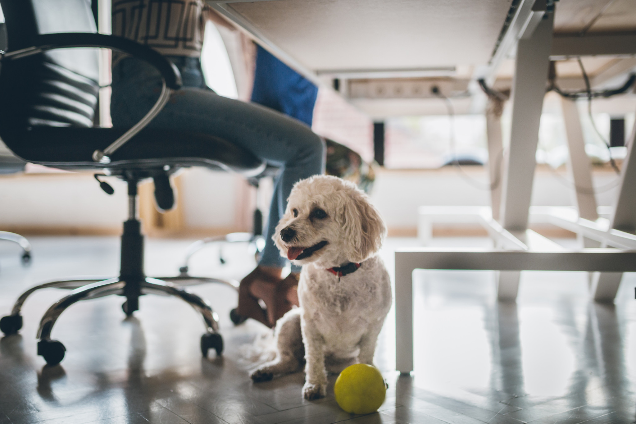Animal Liability - Bringing Your Dog To Work