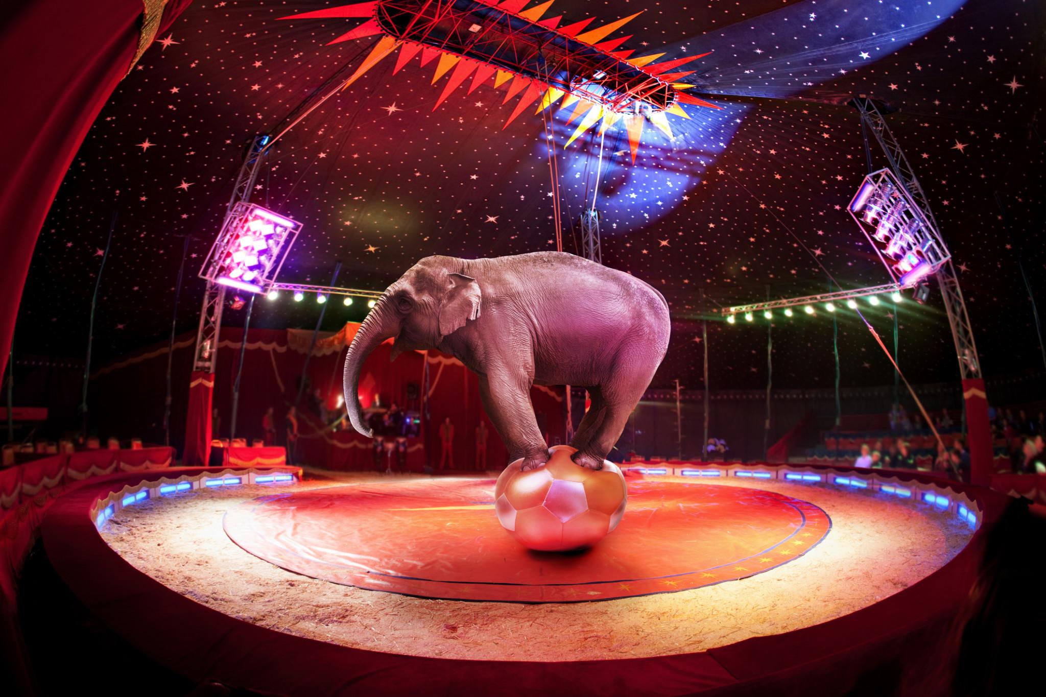 circus insurance