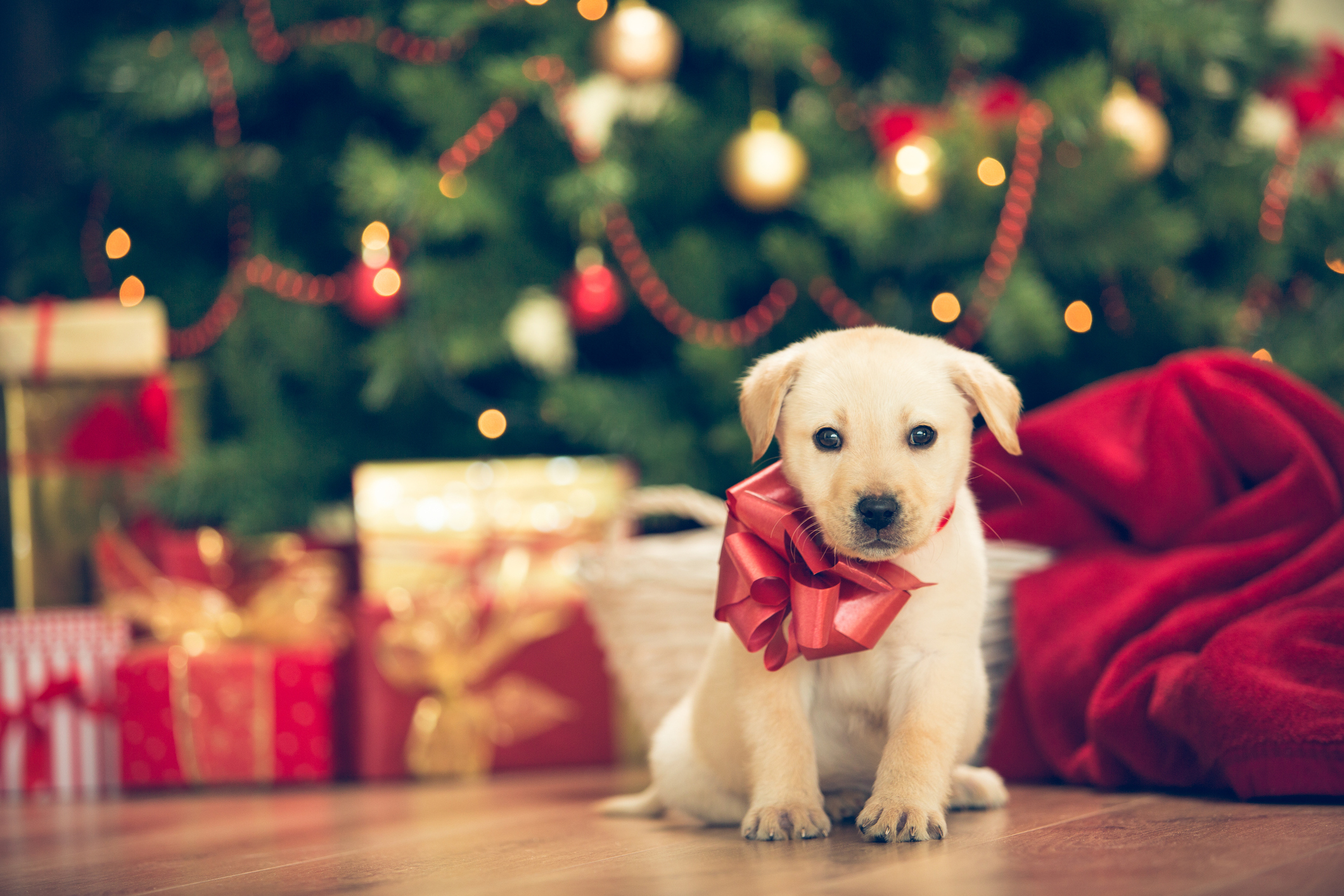 insurance for holiday puppies