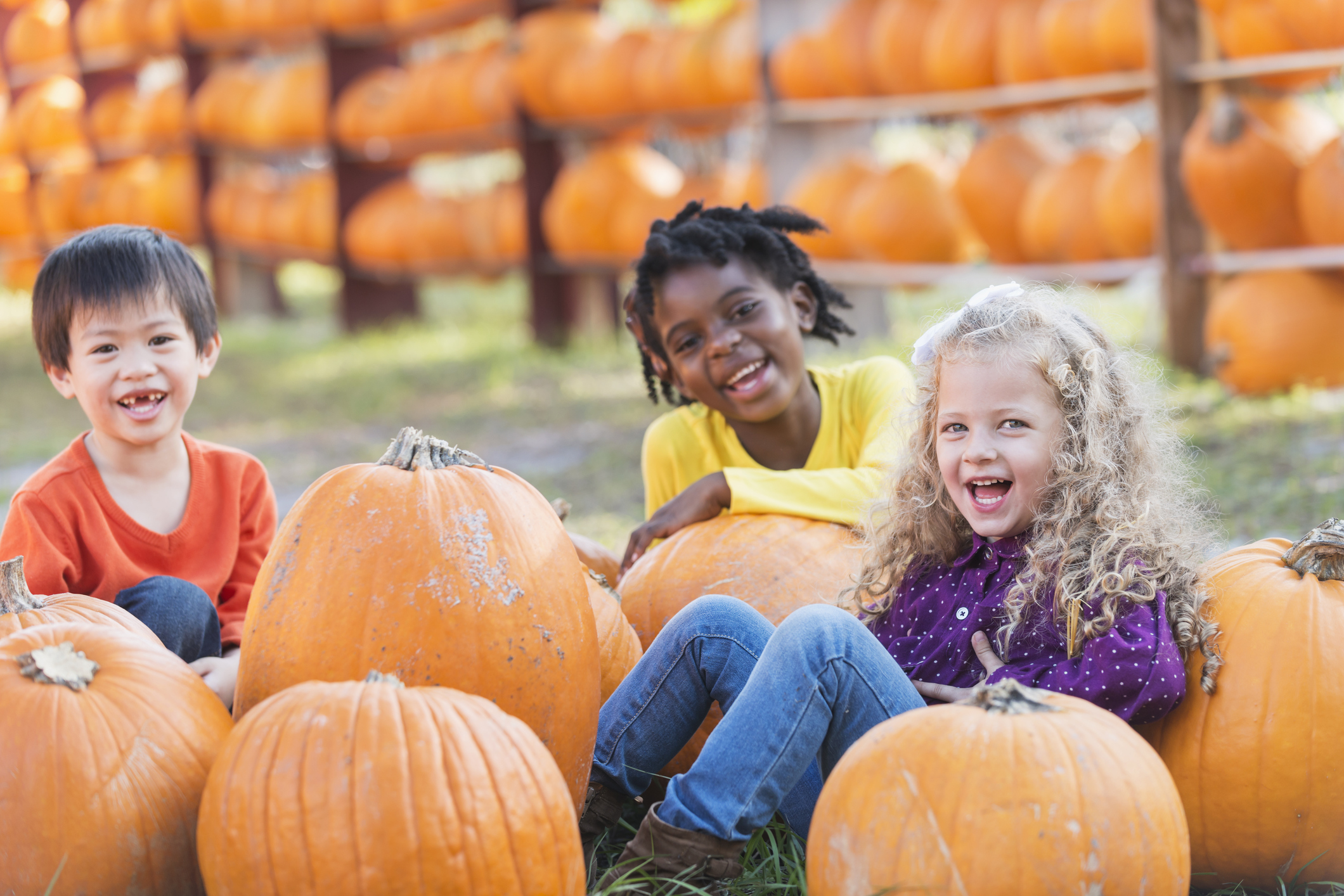 Insurance for Pumpkin Patch Owners