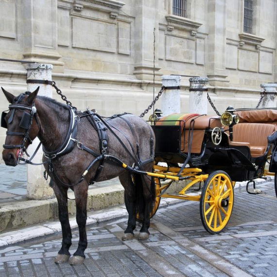 Liability Insurance for Horse Carriage Operations & Services