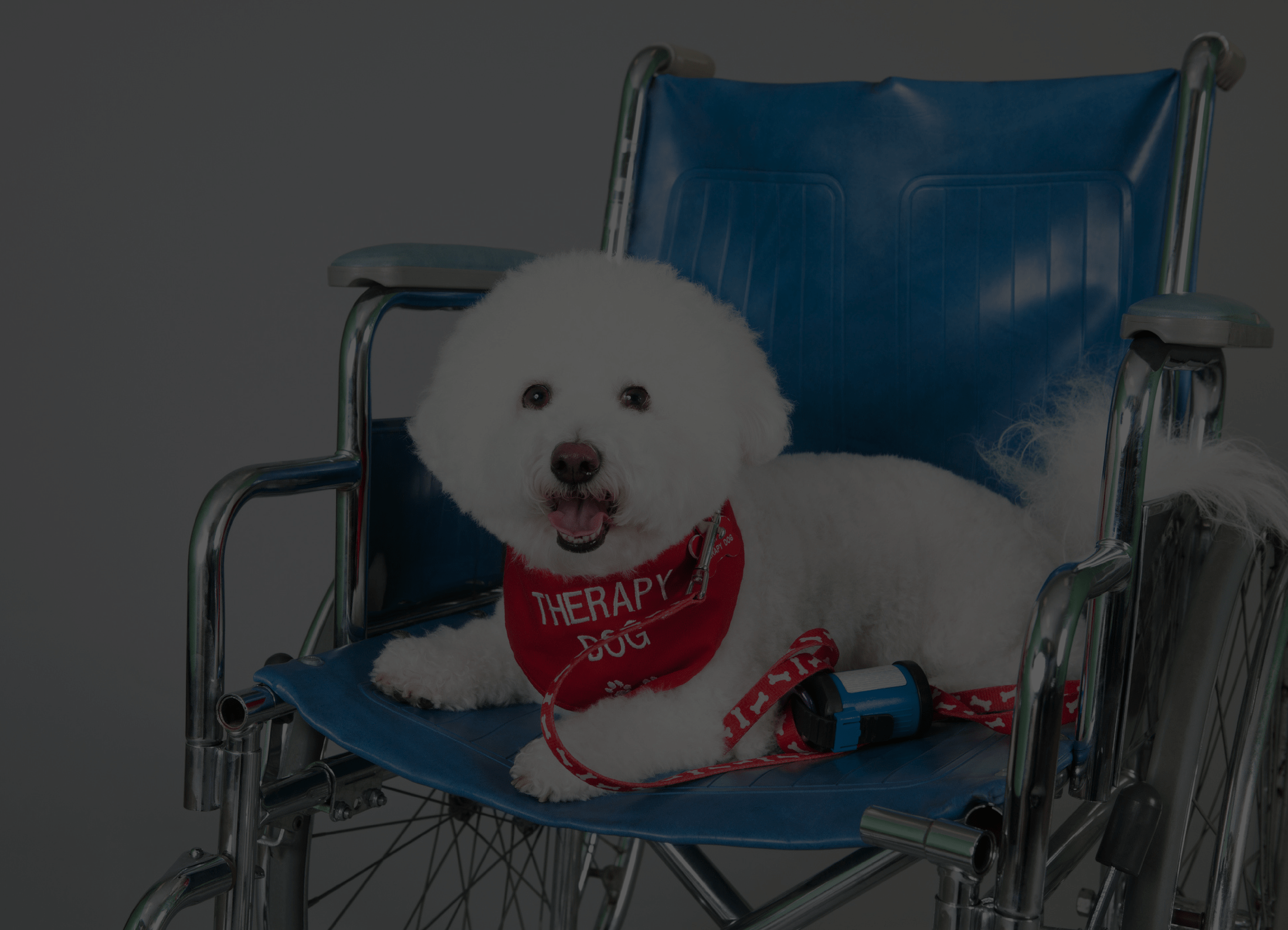 commercial therapy dog insurance